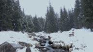Nevica in un bosco di pini con ruscello