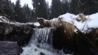 Nevica nel bosco con ruscello