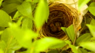 New born birds in nest