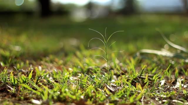 New life plant