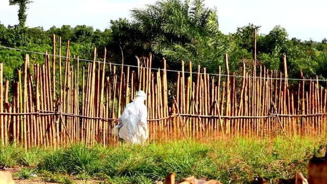 New methods to try and stem the Ebola epidemic are being tested on a regular basis in Liberia