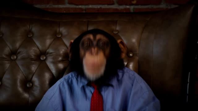 New Monkey Crazy Office Boss Fooling Around