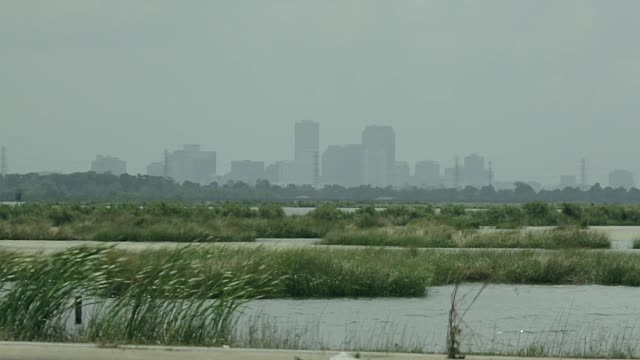 New Orleans Skyline with marsh swamp in foreground