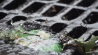 New York City Storm Drain - slow motion 240 fps
