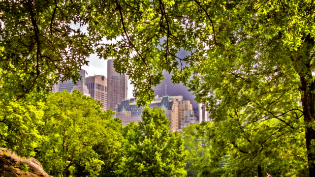 New York in tree frame