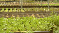 MS, PAN, USA, New York State, Bedford Hills, greenhouse vegetable garden beds