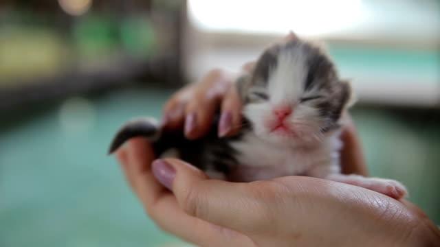 Neugeborenes Katze in der hand
