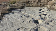 Newly uncovered dinosaur tracks Colorado Picket Wire Canyonlands