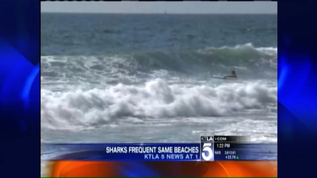 News Anchors Report on Great White Shark Sightings Along the California Coast