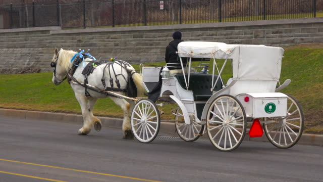 Niagara Falls City: Horse drawn carriage in the city streets