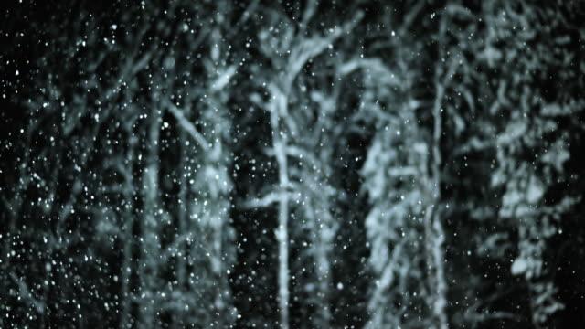 SLO MO notte Ritratto di alberi durante una nevicata