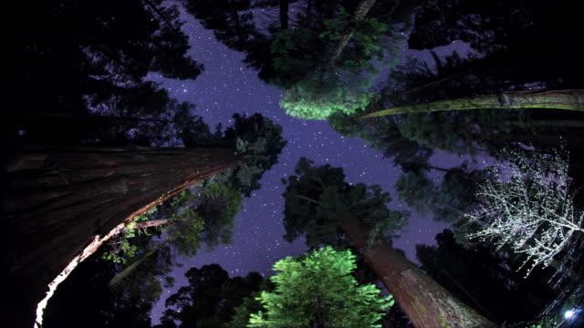 Night Sky - Above the Treetops