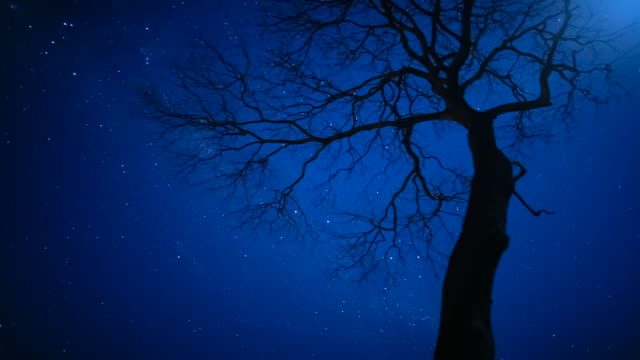T/L, WS, night sky stars behind silhouetted tree / Pantanal, Mato Grosso, Brazil