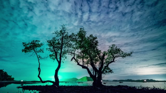 Night trees in the water time lapse 4K