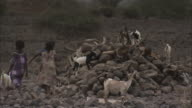 WS Nomadic kids tend goats on pile of rocks / Republic of South Africa