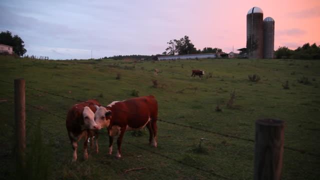 North Carolina Dairy Farm