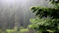 Northwest Rain