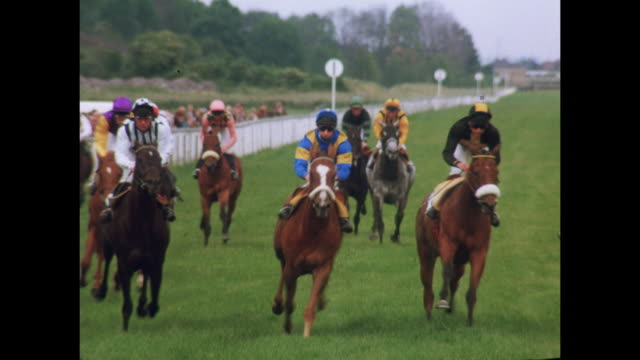 1981 - Nottingham horse and dog racing