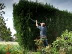 NTSC:Cutting the hedge