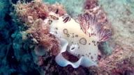 Nudibranch is sea slug