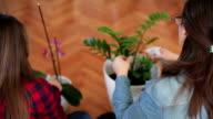 Nurture plants
