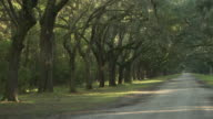 WS, PAN, Oak avenue in Wormsloe Historic site, Savannah, Georgia, USA