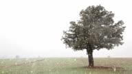 Oak Tree in Blizzard
