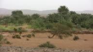 WS Oasis in desert / Ouadane, Adrar, Mauritania