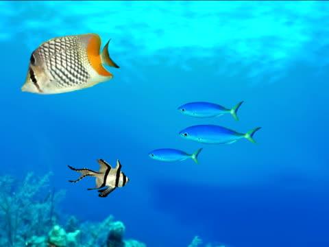Ocean and Fish