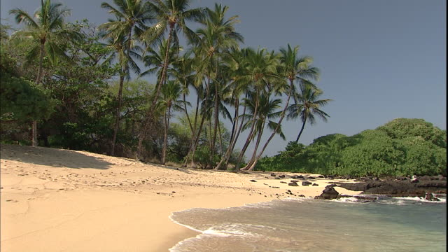 Ocean waves wash up on beach with palm trees in Kekaha Kai State Park.