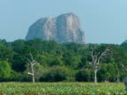 MWA of Elephant rock, Yala National Park, Forest and mass of water lilies in foreground