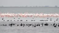 Officials form Turkey's Ministry of Forestry and Water Affairs count flamingos in the Akyatan Agyatan and Yumurtalik lagoons in Adana Turkey on...