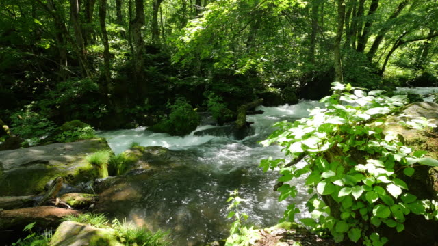 oirase stream and green leaf in dolly motion