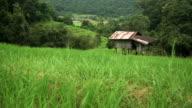 alt und klein Hütte liegt unter terrassierten Reisfelder am Berghang