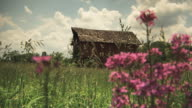 WS Old barn with grass and flowers in foreground, Iowa, USA