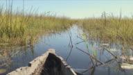 WS POV Old boat cutting through wetland / Okavango Delta, Botswana