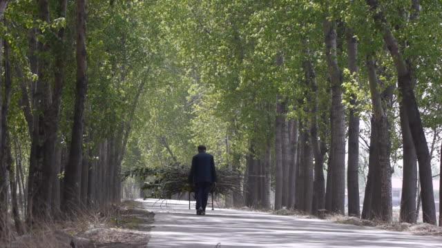 Uomo anziano collezione di legna da ardere passeggiata nella avenue