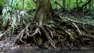 Old root in forest.