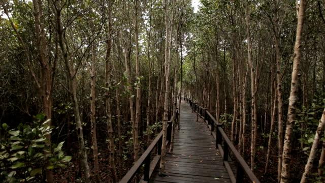 Alte Holz Gang im Mangrovenwald