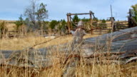 Old wooden ranching corral wild west 3 Western Ranch Oregon 32