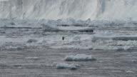 WS One Adélie penguin on ice, Antarctica