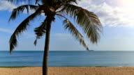 One palm on the sea beach