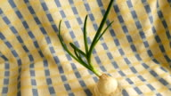 Onion turning on scallion (spring onion)