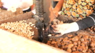 Open Cashew Nut