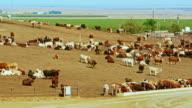 Open-Air-Fleisch-Farm in der Nähe von Coalinga, Kalifornien, USA