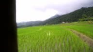 opening by panning: delighted rice terraced field