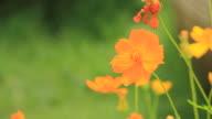 Orange flower blowing in breeze