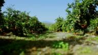 Orange Garten an Sommer Tag