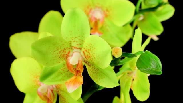 Orchid Mother blühenden HD -