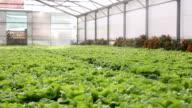 Organic and fresh vegetable garden